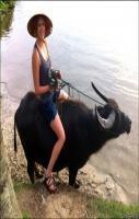 Baby Like Bull