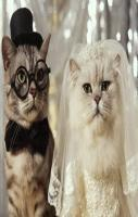 Cat Marriage