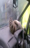 fish on dashboard