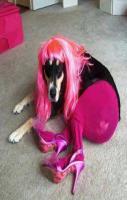 Sexy Dogy