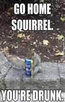 Go home squirrel