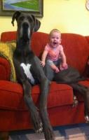21 Dogs Who Don't Realize How Big They Are. You'll smile.