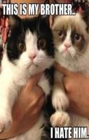 Grumpy cat\'s brother, so cute!