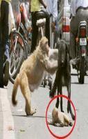 story on Monkey