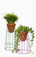 Planters made of tomato stands. One method to create elevated heights