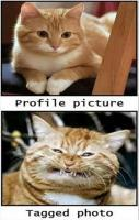 Cats Profile Picture VS Tagged Photo I laughed way too hard at this Th