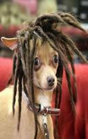 FUNNY PETS New hair do
