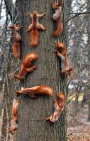 Family Meeting of Squirrel... LOL