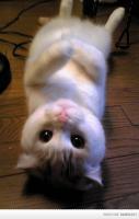 OMG Cuteness Overload!!!!!