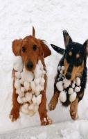 Funny Dogs In Snow