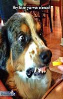 funny dog face picture