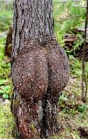 Junk in the trunk! This should NOT be this funny! Haha!!