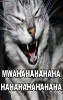 Funny cat laugh