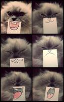 Cat emotions