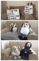 Best Dog shaming... LOL