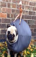 This pug dressed as the wrecking ball from Miley Cyrus's music video