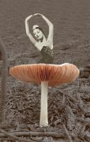 The top of a mushroom is the bottom skirt of a ballerina- nice compari
