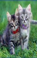 Twince Cats