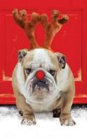 Grumpy Dog On Christmas. Marry Christmas to all.