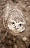#Owl #BirdsofPrey #BirdofPrey #Bird of Prey