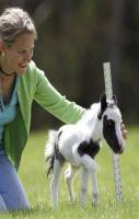 World\\\'s smallest horse Photo