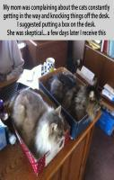 Organizing the cats.. ahahha