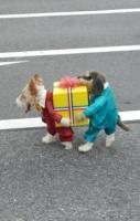Best. Dog costume. Ever