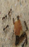Release ants into your toaster to remove bread crumbs that accumulate