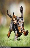 Running Puppy Funny Pictures