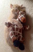 Kitteh hugging a giraffe