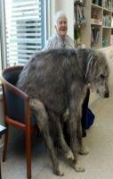 21 Dogs Who Don't Realize How Big They Are. I want all of them
