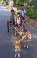 Funny Dog Cart