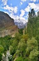 Lady Finger in Gilgit Baltistan Pakistan