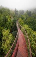 Canopy Walkway to Walk Above Trees In Cape Town