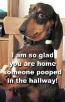 Funny Dog Quotes Photo