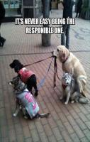 Responsible animal... lol