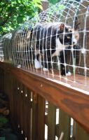 This lady made an outdoor cat enclosure for her 'indoor cats' ... it