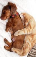 Aww! So cute photo of dog n cat