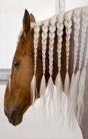 Beautiful Horses Hairstyles