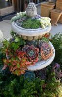 'Succulent Container Gardens'