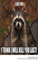 funny evil raccoon rubbing hand