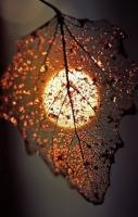 leaf by the light of the silvery moon