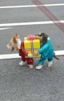 Best dog costume ever haha