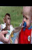 Funny Baby With Monkey