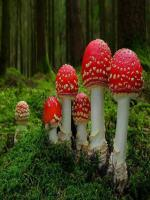 Red Colored Mushrooms