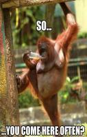 Studly Monkey