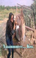 Crazy girl kissing donkey