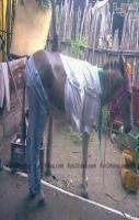 horse pcs