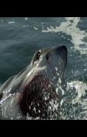 Amazing Dolphin Jump