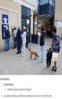 Just a fox making a withdrawal - Imgur